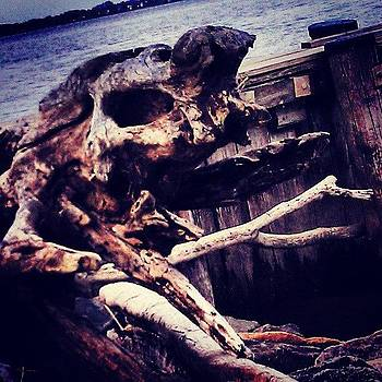 Driftwood by Rebecca Kowalczik
