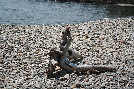 Driftwood by Terry Decker