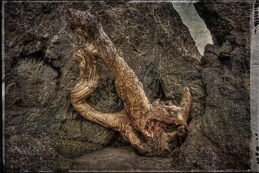 Thom Zehrfeld - Driftwood