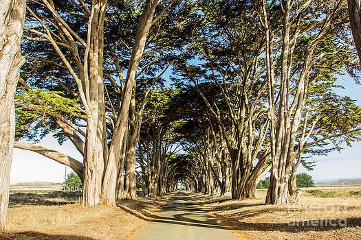 Driveway by Tim Tolok
