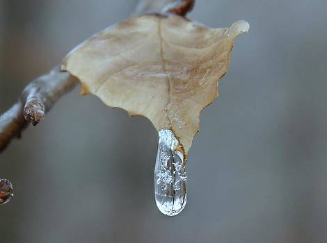 Drop of Ice by Candice Trimble