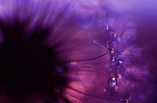 David Hawkins-Weeks - Droplet Study #4