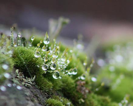 Cathie Douglas - Droplets