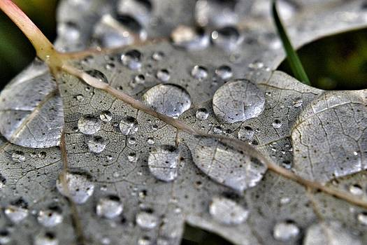 Droplets by Heather Morris
