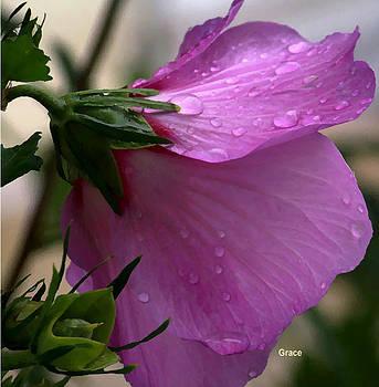 Droplets by Julie Grace