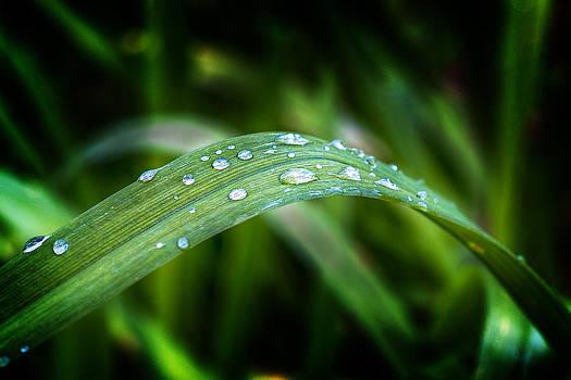 Droplets on a Leaf by Barry O Carroll