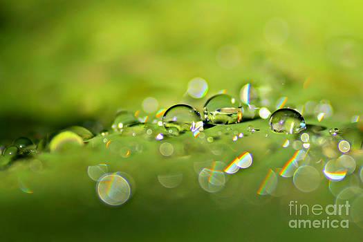 Droplets On Green by Ste Flei