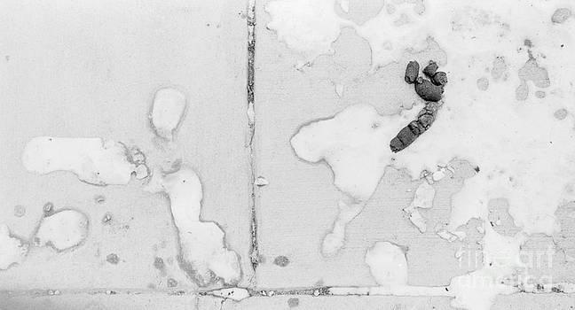 Droppings by Paul Frederiksen