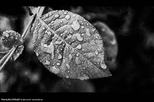 Drops and leaf by Mac Of BIOnighT