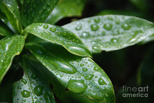 Drops of Life by Charles Dobbs