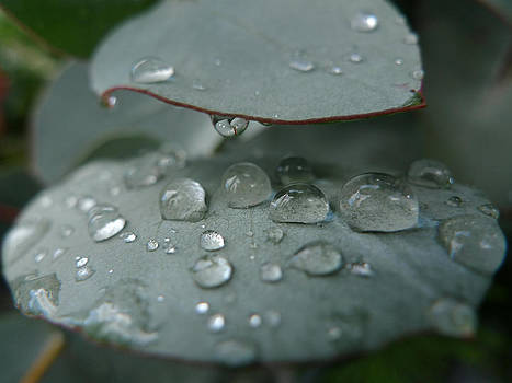Drops of water by Nina Peterka