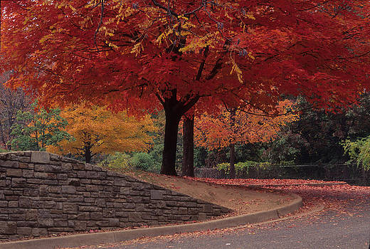 Druid Park-Baltimore -- Maryland II by Harold E McCray