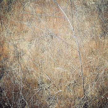 Dry Brush Abstract by Yves Rubin