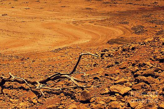 Dry spell by Vishakha Bhagat