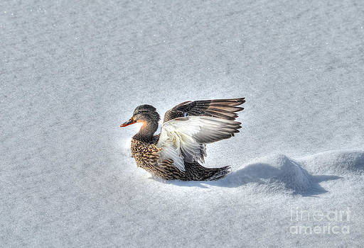 Duck Angel by Skye Ryan-Evans