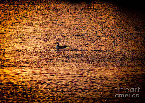 Duck at Sunset by Andres LaBrada