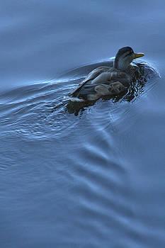 Duck blues by Monic LaRochelle