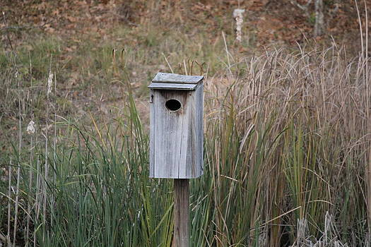 Duck Box by Charlotte Craig