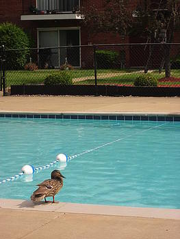 Duck By The Pool by Guy Ricketts