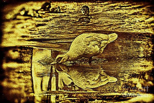 Charles Davis - Duck Dipping