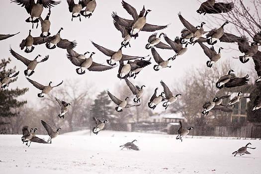 Duck duck geeeese by Linda Storm