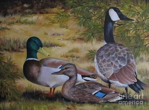 Duck Duck Goose by Karen Olson