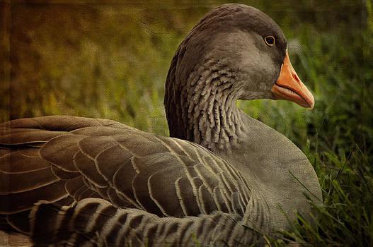Duck Duck Goose by Kathy Jennings