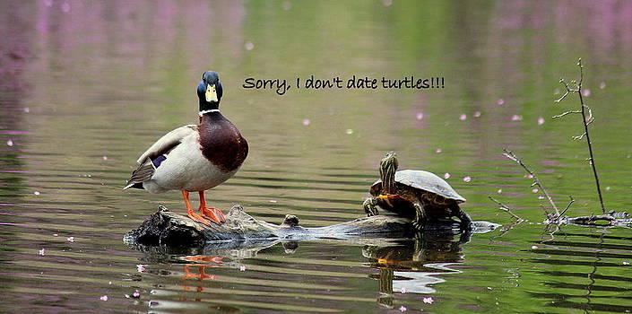 Rosanne Jordan - Duck Humor