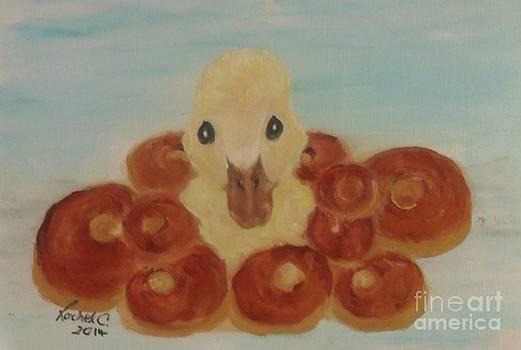 Duck n Donuts by Rachel Carmichael