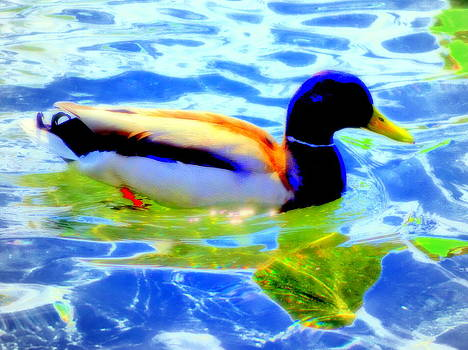 Ducks Can Have Their Reflections Too  by Hilde Widerberg