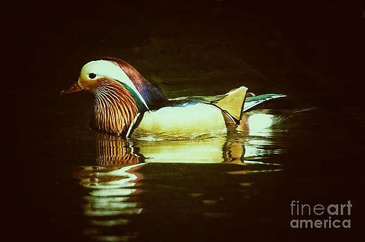 Duck Reflections by Kelly Wall