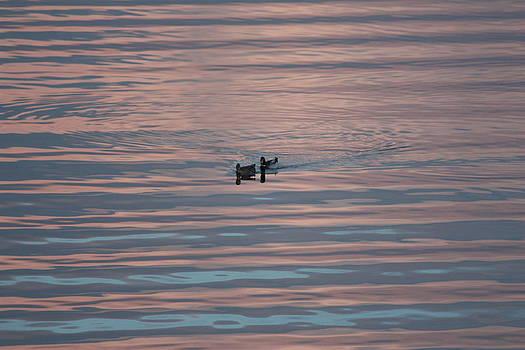 Duck tales in the sky by Nedra Russ