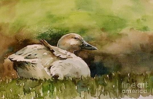 Duck by Tania Vasylenko