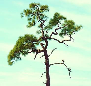 Duck Tree by Van Ness