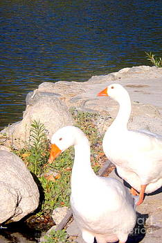 Duck Walk by Deborah Yeager