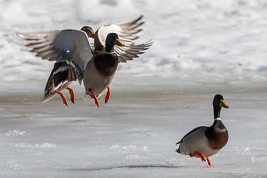 Gaurav Singh - Ducking Around