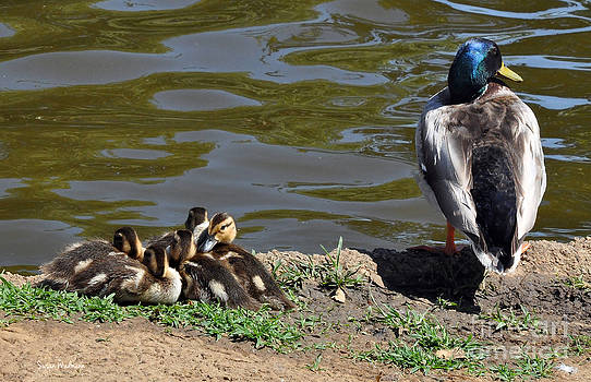 Susan Wiedmann - Ducklings With Daddy Duck