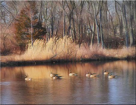 Duckpond in winter by Mikki Cucuzzo
