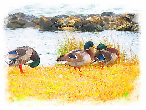 Ducks 1271 by J D  Whaley