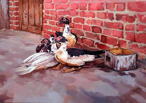 Ducks  by Ahmed Bayomi