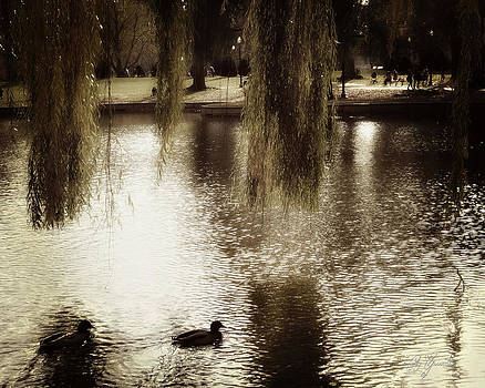 Ducks and Willows  by Cindy Greenstein