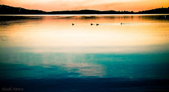 Ducks at dusk by Cindi Castro