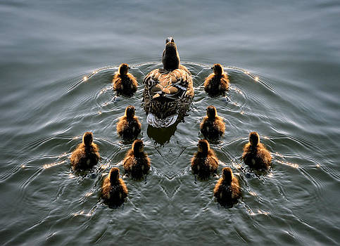 Duck Formation by Dale Hall