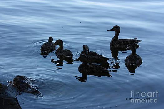 Ducks at Dusk by Derek O'Gorman