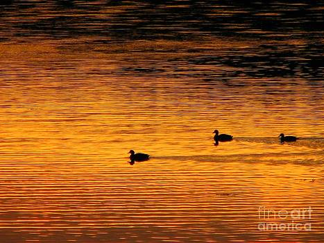 Christine Stack - Ducks at Sunset