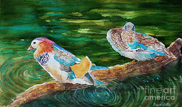 Ducks in a pond by Marisa Gabetta