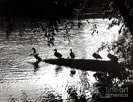 Ducks in a Row by   Joe Beasley