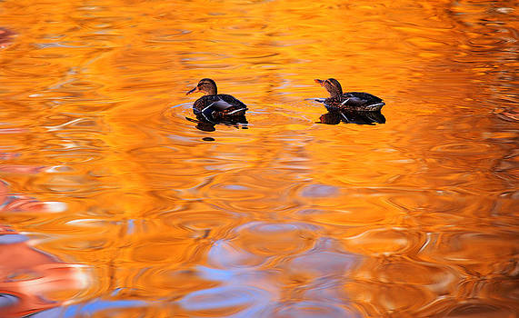 Jenny Rainbow - Ducks on the Golden Waters