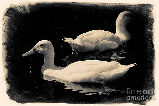 Ducks on the Lake by Chris Armytage