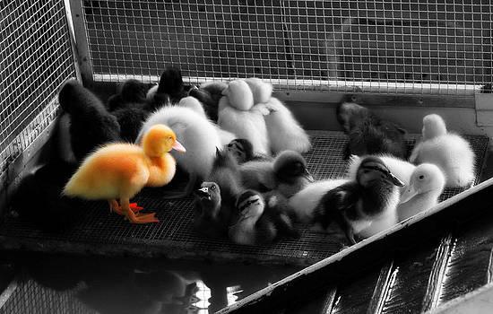 Ducky by Nicole  Lambert